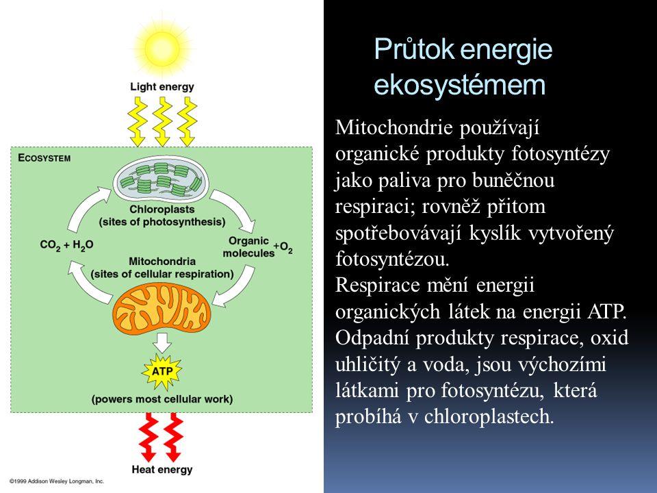 """Exergonické reakce = energie se uvolňuje Elektrony """"padají z organických molekul na kyslík během buněčné respirace C 6 H 12 O 6 + 6O 2 6CO 2 + 6H 2 O oxidace redukce Organické molekuly s mnoha atomy vodíku jsou obecně výborným """"palivem , neboť obsahují mnoho vysokoenergických elektronů."""