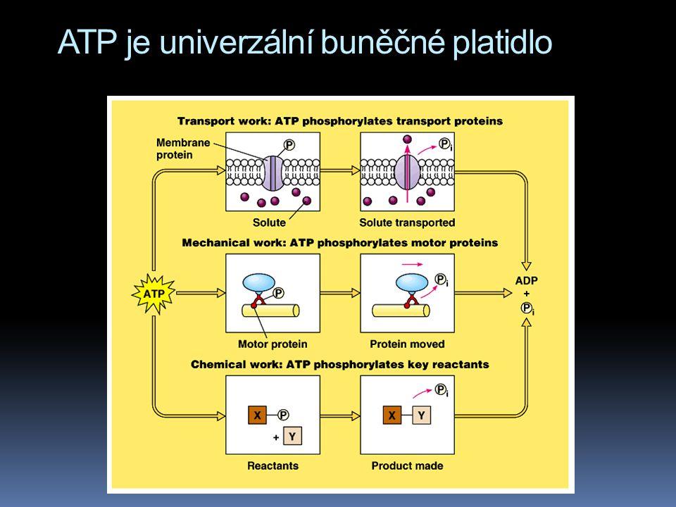 ATP je univerzální buněčné platidlo