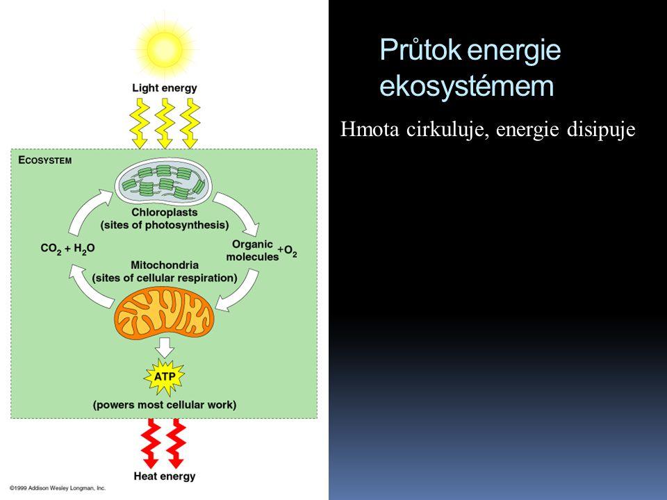 Průtok energie ekosystémem Hmota cirkuluje, energie disipuje