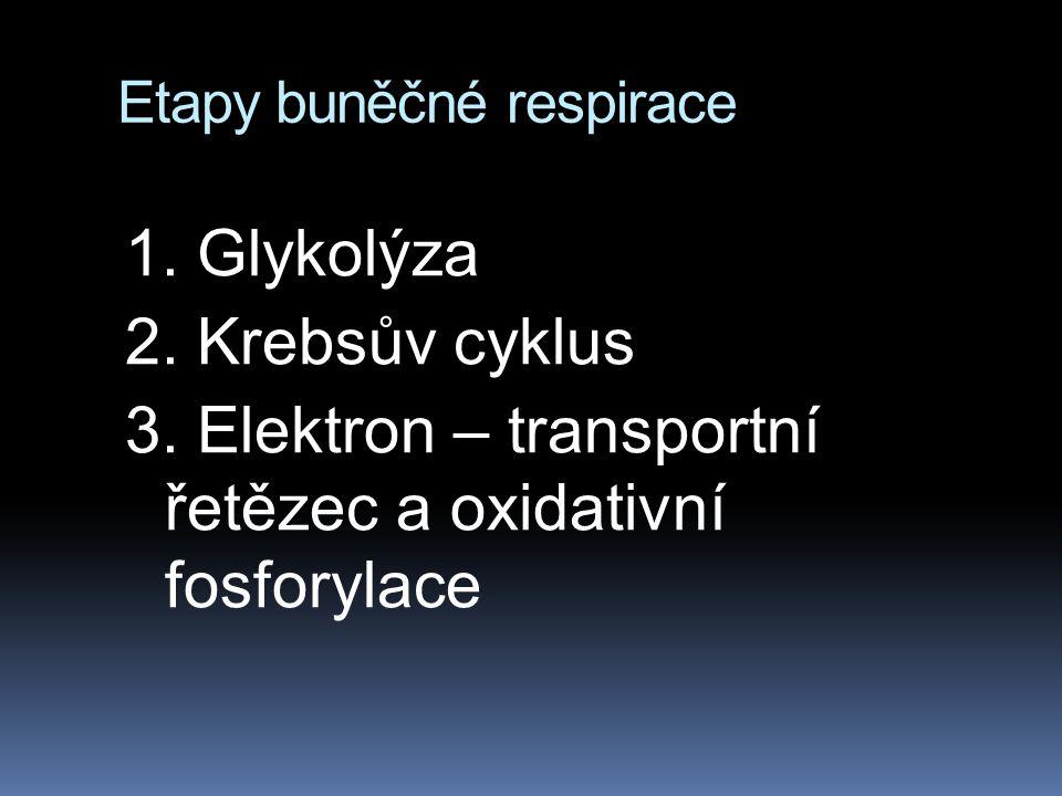 Etapy buněčné respirace 1. Glykolýza 2. Krebsův cyklus 3. Elektron – transportní řetězec a oxidativní fosforylace