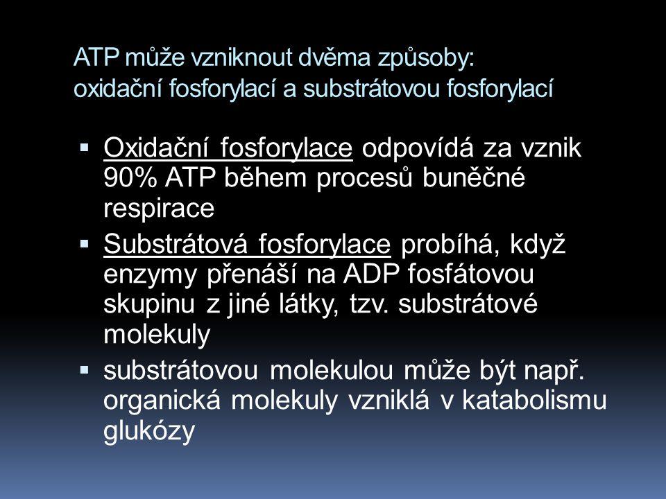 ATP může vzniknout dvěma způsoby: oxidační fosforylací a substrátovou fosforylací  Oxidační fosforylace odpovídá za vznik 90% ATP během procesů buněč