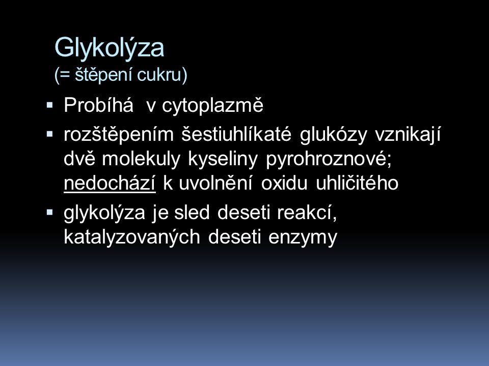 Glykolýza (= štěpení cukru)  Probíhá v cytoplazmě  rozštěpením šestiuhlíkaté glukózy vznikají dvě molekuly kyseliny pyrohroznové; nedochází k uvolně