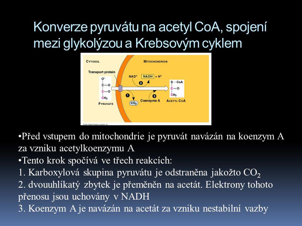 Před vstupem do mitochondrie je pyruvát navázán na koenzym A za vzniku acetylkoenzymu A Tento krok spočívá ve třech reakcích: 1. Karboxylová skupina p