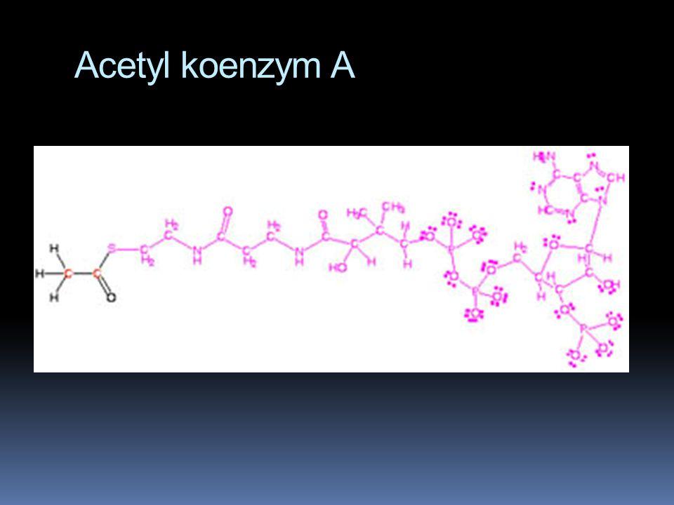 Acetyl koenzym A