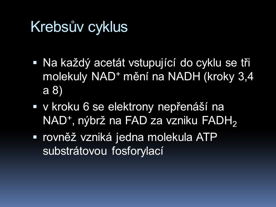 Krebsův cyklus  Na každý acetát vstupující do cyklu se tři molekuly NAD + mění na NADH (kroky 3,4 a 8)  v kroku 6 se elektrony nepřenáší na NAD +, n