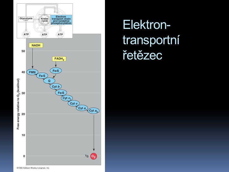 Elektron- transportní řetězec