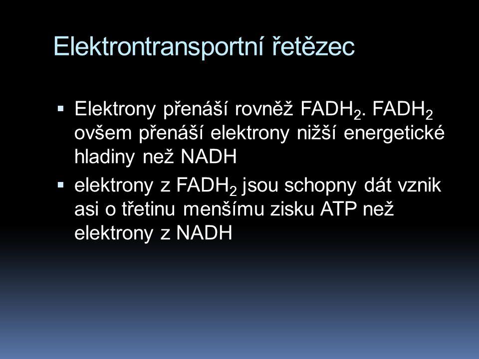 Elektrontransportní řetězec  Elektrony přenáší rovněž FADH 2. FADH 2 ovšem přenáší elektrony nižší energetické hladiny než NADH  elektrony z FADH 2
