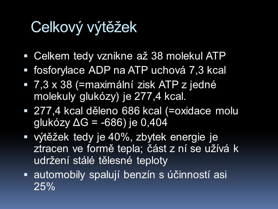 Celkový výtěžek  Celkem tedy vznikne až 38 molekul ATP  fosforylace ADP na ATP uchová 7,3 kcal  7,3 x 38 (=maximální zisk ATP z jedné molekuly gluk