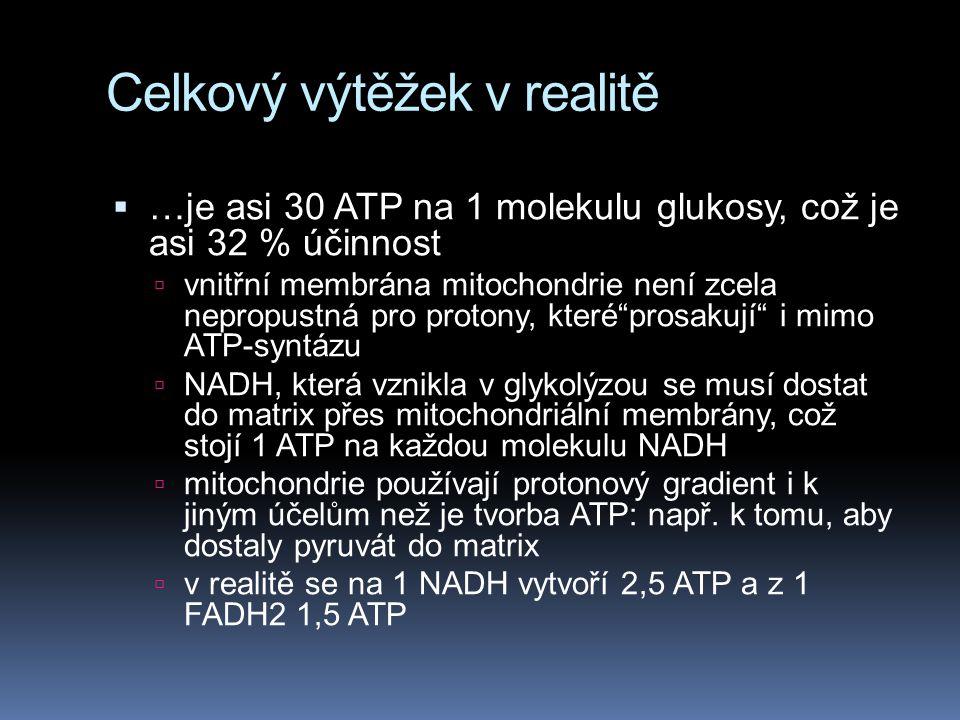 Celkový výtěžek v realitě  …je asi 30 ATP na 1 molekulu glukosy, což je asi 32 % účinnost  vnitřní membrána mitochondrie není zcela nepropustná pro