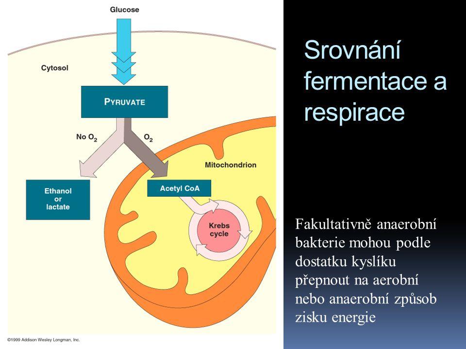 Srovnání fermentace a respirace Fakultativně anaerobní bakterie mohou podle dostatku kyslíku přepnout na aerobní nebo anaerobní způsob zisku energie