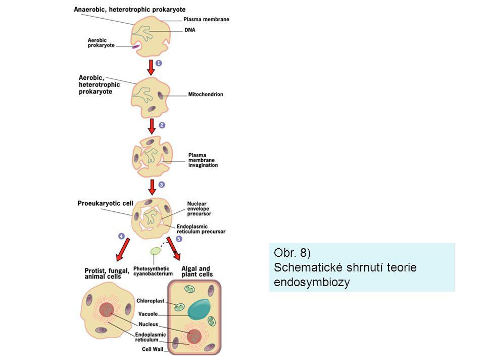 Obr. 8) Schematické shrnutí teorie endosymbiozy