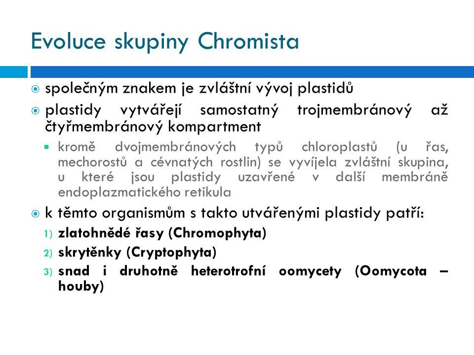 Evoluce skupiny Chromista  společným znakem je zvláštní vývoj plastidů  plastidy vytvářejí samostatný trojmembránový až čtyřmembránový kompartment  kromě dvojmembránových typů chloroplastů (u řas, mechorostů a cévnatých rostlin) se vyvíjela zvláštní skupina, u které jsou plastidy uzavřené v další membráně endoplazmatického retikula  k těmto organismům s takto utvářenými plastidy patří: 1) zlatohnědé řasy (Chromophyta) 2) skrytěnky (Cryptophyta) 3) snad i druhotně heterotrofní oomycety (Oomycota – houby)