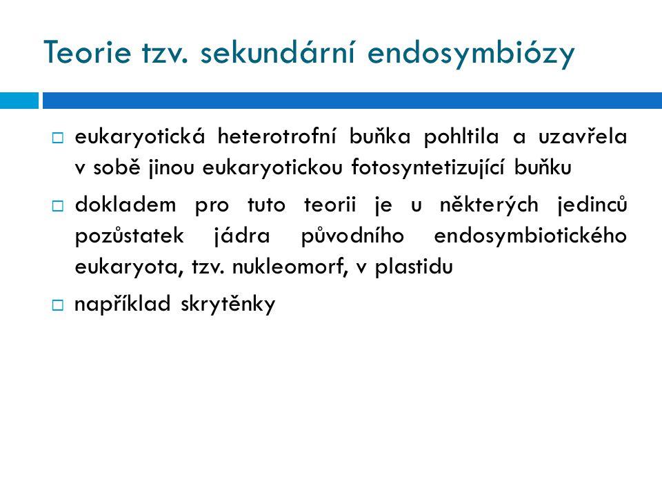 Teorie tzv. sekundární endosymbiózy  eukaryotická heterotrofní buňka pohltila a uzavřela v sobě jinou eukaryotickou fotosyntetizující buňku  doklade