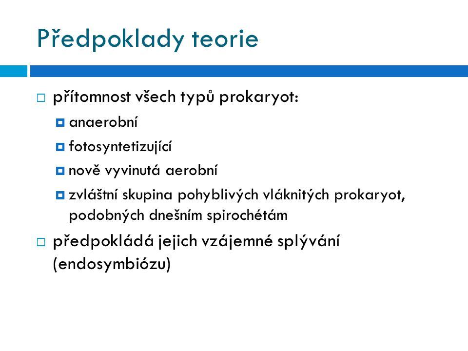 Předpoklady teorie  přítomnost všech typů prokaryot:  anaerobní  fotosyntetizující  nově vyvinutá aerobní  zvláštní skupina pohyblivých vláknitých prokaryot, podobných dnešním spirochétám  předpokládá jejich vzájemné splývání (endosymbiózu)