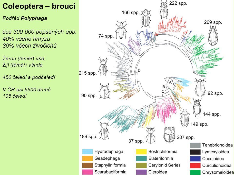 Coleoptera – brouci Podřád Polyphaga cca 300 000 popsaných spp.