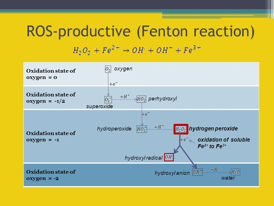 Oxidation state of oxygen = -2 Oxidation state of oxygen = -1 Oxidation state of oxygen = -1/2 Oxidation state of oxygen = 0 ROS-productive (Fenton re