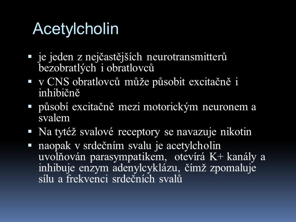 Acetylcholin  je jeden z nejčastějších neurotransmitterů bezobratlých i obratlovců  v CNS obratlovců může působit excitačně i inhibičně  působí exc