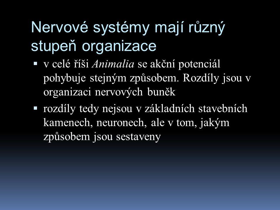 Nervové systémy mají různý stupeň organizace  v celé říši Animalia se akční potenciál pohybuje stejným způsobem. Rozdíly jsou v organizaci nervových