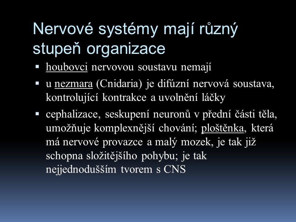 Nervové systémy mají různý stupeň organizace  houbovci nervovou soustavu nemají  u nezmara (Cnidaria) je difúzní nervová soustava, kontrolující kont