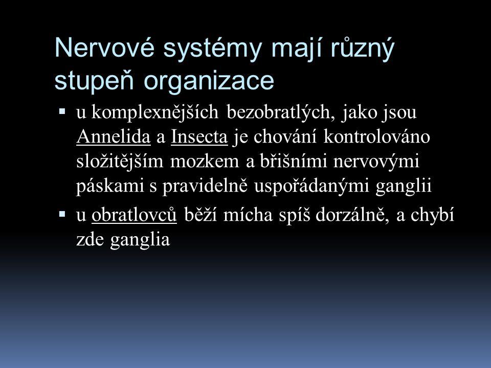 Nervové systémy mají různý stupeň organizace  u komplexnějších bezobratlých, jako jsou Annelida a Insecta je chování kontrolováno složitějším mozkem