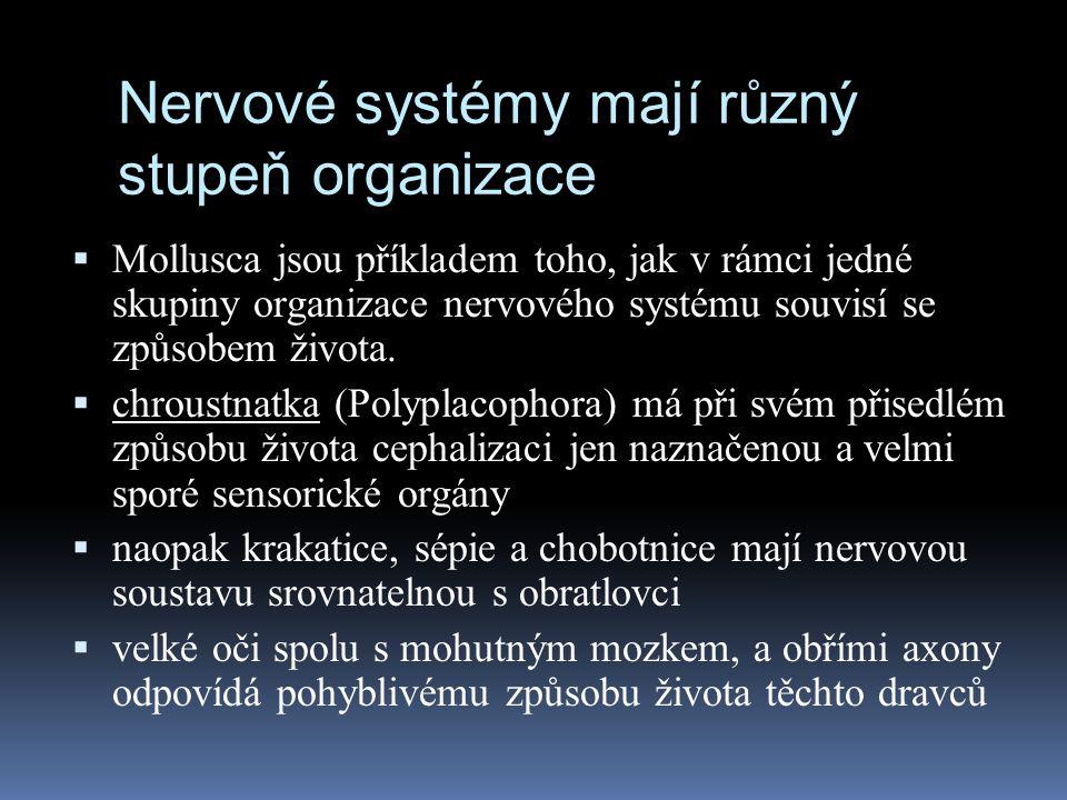 Nervové systémy mají různý stupeň organizace  Mollusca jsou příkladem toho, jak v rámci jedné skupiny organizace nervového systému souvisí se způsobe