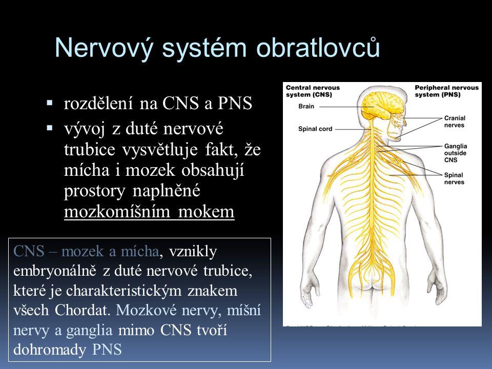 Nervový systém obratlovců  rozdělení na CNS a PNS  vývoj z duté nervové trubice vysvětluje fakt, že mícha i mozek obsahují prostory naplněné mozkomí