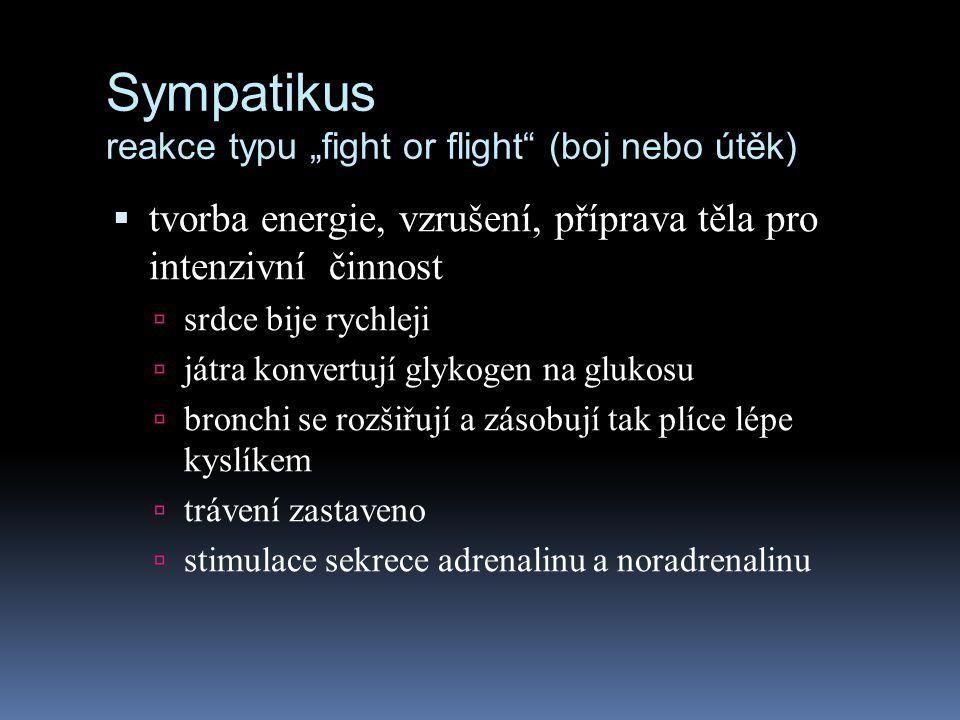 """Sympatikus reakce typu """"fight or flight"""" (boj nebo útěk)  tvorba energie, vzrušení, příprava těla pro intenzivní činnost  srdce bije rychleji  játr"""