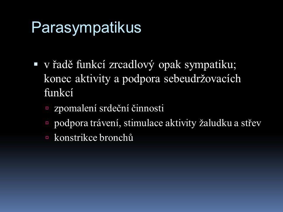 Parasympatikus  v řadě funkcí zrcadlový opak sympatiku; konec aktivity a podpora sebeudržovacích funkcí  zpomalení srdeční činnosti  podpora tráven