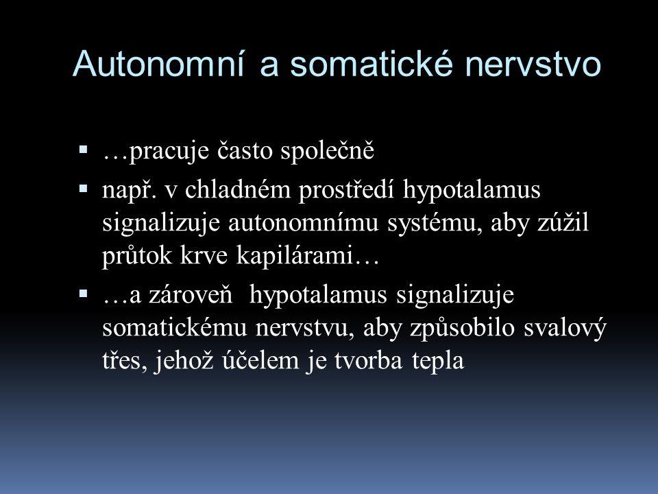Autonomní a somatické nervstvo  …pracuje často společně  např. v chladném prostředí hypotalamus signalizuje autonomnímu systému, aby zúžil průtok kr