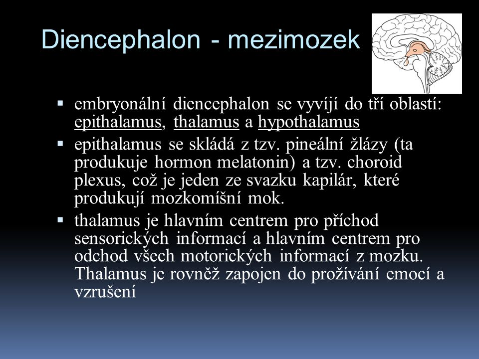 Diencephalon - mezimozek  embryonální diencephalon se vyvíjí do tří oblastí: epithalamus, thalamus a hypothalamus  epithalamus se skládá z tzv. pine