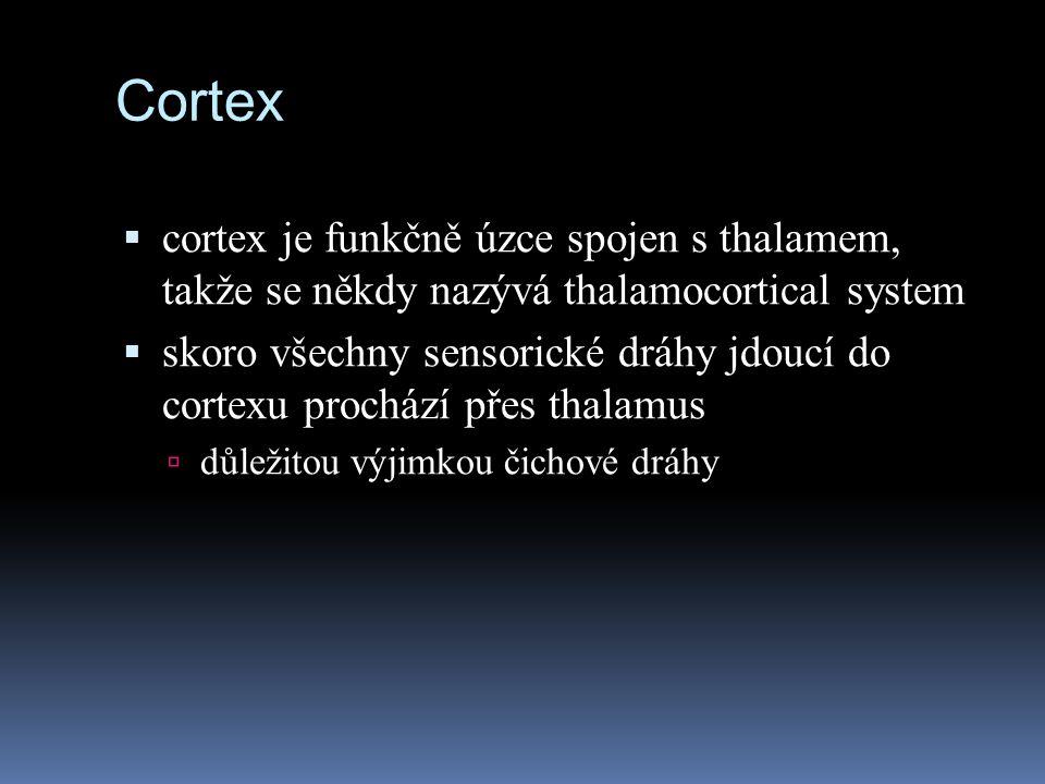 Cortex  cortex je funkčně úzce spojen s thalamem, takže se někdy nazývá thalamocortical system  skoro všechny sensorické dráhy jdoucí do cortexu pro