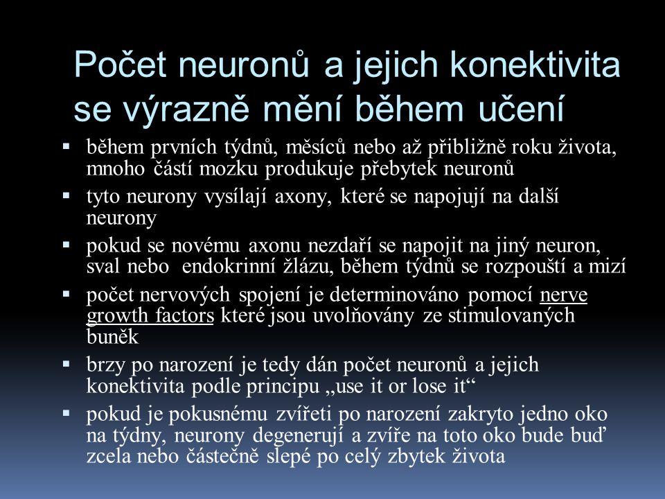 Počet neuronů a jejich konektivita se výrazně mění během učení  během prvních týdnů, měsíců nebo až přibližně roku života, mnoho částí mozku produkuj