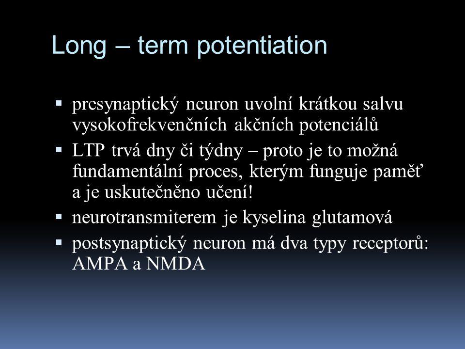 Long – term potentiation  presynaptický neuron uvolní krátkou salvu vysokofrekvenčních akčních potenciálů  LTP trvá dny či týdny – proto je to možná