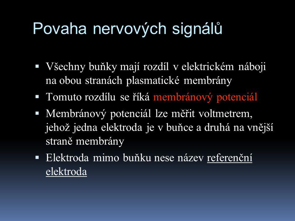 Povaha nervových signálů  Všechny buňky mají rozdíl v elektrickém náboji na obou stranách plasmatické membrány  Tomuto rozdílu se říká membránový po