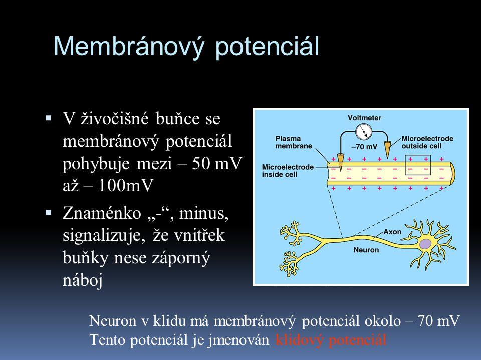 "Membránový potenciál  V živočišné buňce se membránový potenciál pohybuje mezi – 50 mV až – 100mV  Znaménko ""-"", minus, signalizuje, že vnitřek buňky"