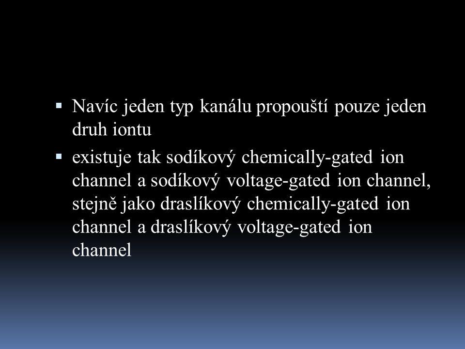  Navíc jeden typ kanálu propouští pouze jeden druh iontu  existuje tak sodíkový chemically-gated ion channel a sodíkový voltage-gated ion channel, s