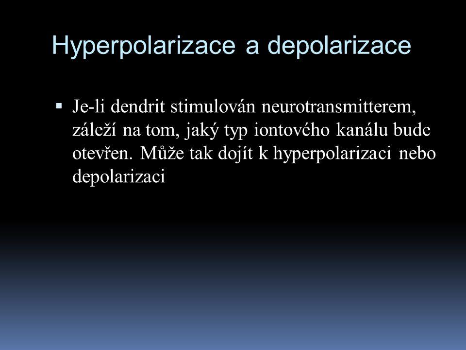 Hyperpolarizace a depolarizace  Je-li dendrit stimulován neurotransmitterem, záleží na tom, jaký typ iontového kanálu bude otevřen. Může tak dojít k