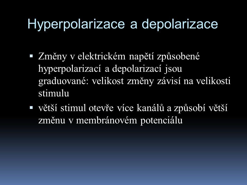 Hyperpolarizace a depolarizace  Změny v elektrickém napětí způsobené hyperpolarizací a depolarizací jsou graduované: velikost změny závisí na velikos
