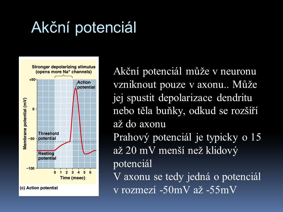 Akční potenciál Akční potenciál může v neuronu vzniknout pouze v axonu.. Může jej spustit depolarizace dendritu nebo těla buňky, odkud se rozšíří až d