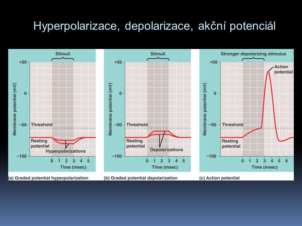 Hyperpolarizace, depolarizace, akční potenciál