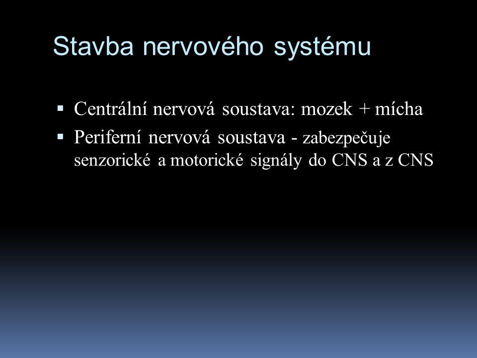 Stavba nervového systému  Centrální nervová soustava: mozek + mícha  Periferní nervová soustava - zabezpečuje senzorické a motorické signály do CNS