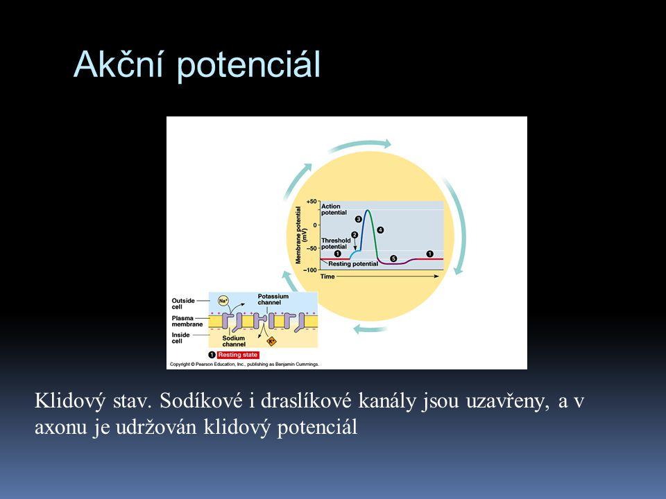 Akční potenciál Klidový stav. Sodíkové i draslíkové kanály jsou uzavřeny, a v axonu je udržován klidový potenciál