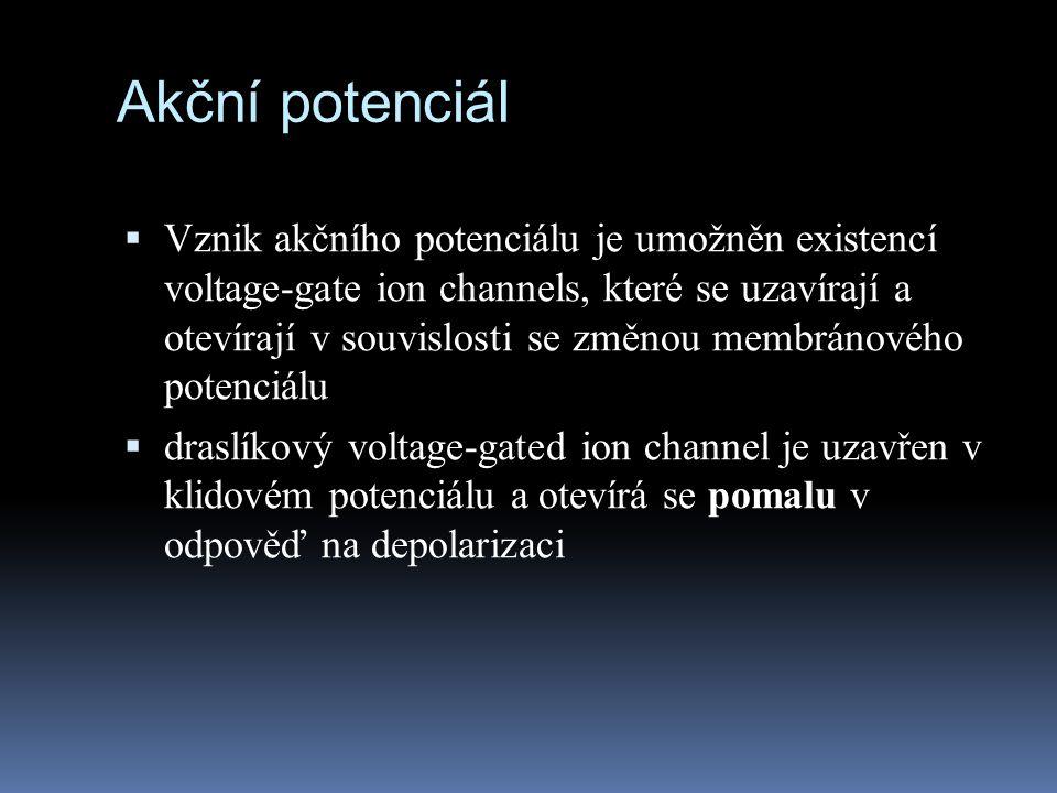 Akční potenciál  Vznik akčního potenciálu je umožněn existencí voltage-gate ion channels, které se uzavírají a otevírají v souvislosti se změnou memb