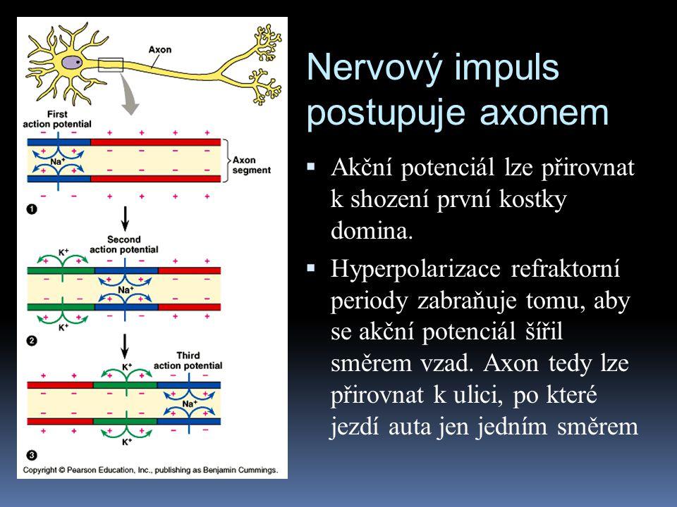 Nervový impuls postupuje axonem  Akční potenciál lze přirovnat k shození první kostky domina.  Hyperpolarizace refraktorní periody zabraňuje tomu, a