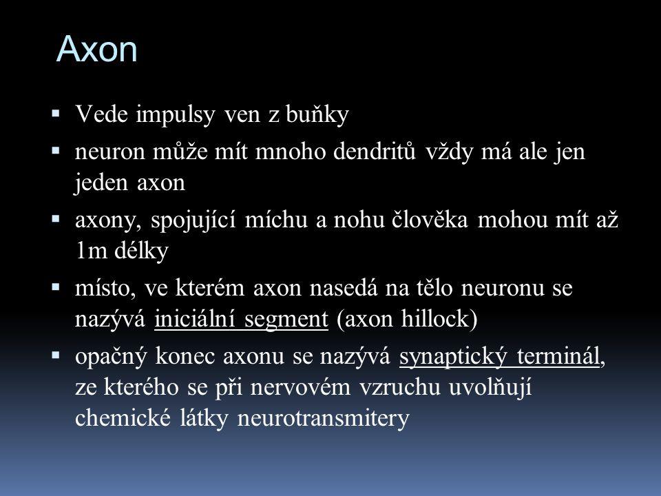 Axon  Vede impulsy ven z buňky  neuron může mít mnoho dendritů vždy má ale jen jeden axon  axony, spojující míchu a nohu člověka mohou mít až 1m dé