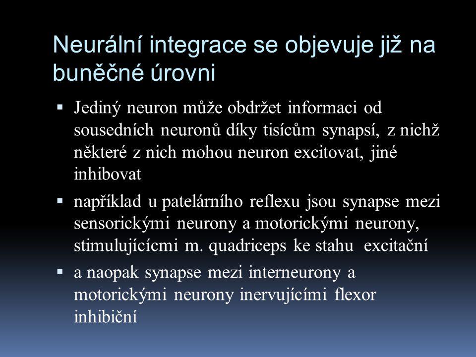 Neurální integrace se objevuje již na buněčné úrovni  Jediný neuron může obdržet informaci od sousedních neuronů díky tisícům synapsí, z nichž někter