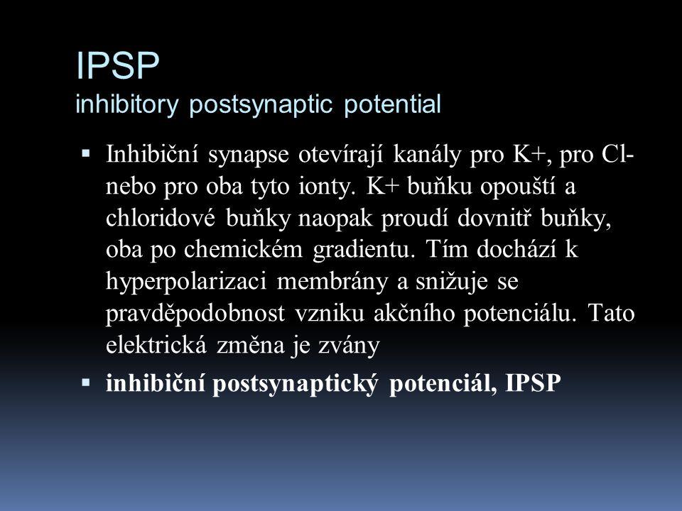 IPSP inhibitory postsynaptic potential  Inhibiční synapse otevírají kanály pro K+, pro Cl- nebo pro oba tyto ionty. K+ buňku opouští a chloridové buň