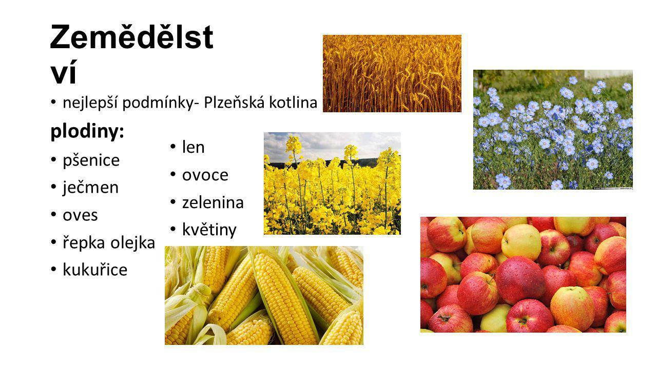 Zemědělst ví nejlepší podmínky- Plzeňská kotlina plodiny: pšenice ječmen oves řepka olejka kukuřice len ovoce zelenina květiny