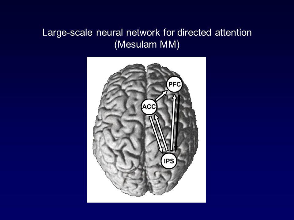 Neglect syndrom (syndrom opomíjení) = selektivní porucha pozornosti pro podněty (uvědomování si podnětů) z poloviny prostoru kontralaterálně k cerebrální lézi.