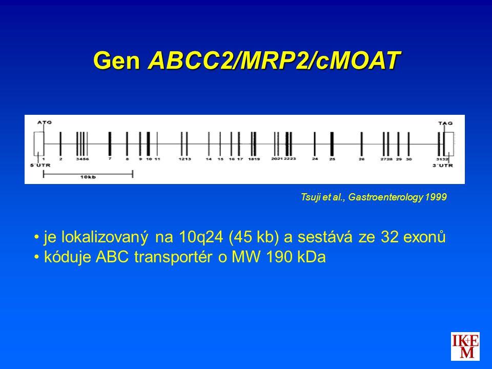 je lokalizovaný na 10q24 (45 kb) a sestává ze 32 exonů kóduje ABC transportér o MW 190 kDa Tsuji et al., Gastroenterology 1999 Gen ABCC2/MRP2/cMOAT